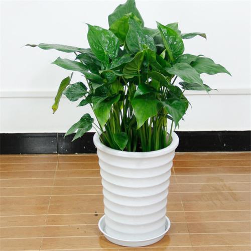 杭州绿植租赁公司