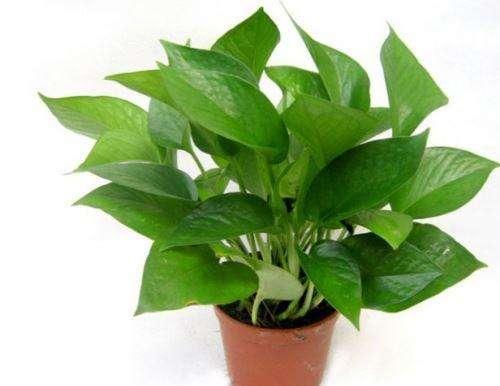 杭州花卉植物租赁