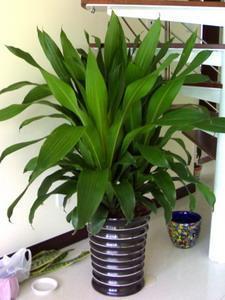 杭州室内植物租赁怎么样?