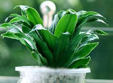 杭州办公室植物租赁公司哪家好?