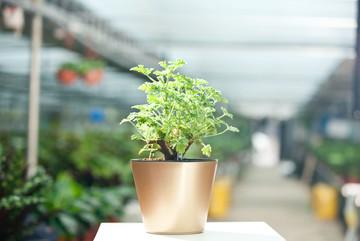 杭州办公室植物租赁价格