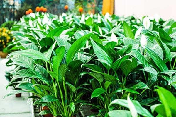 杭州植物租赁