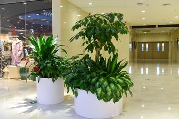 杭州植物租摆