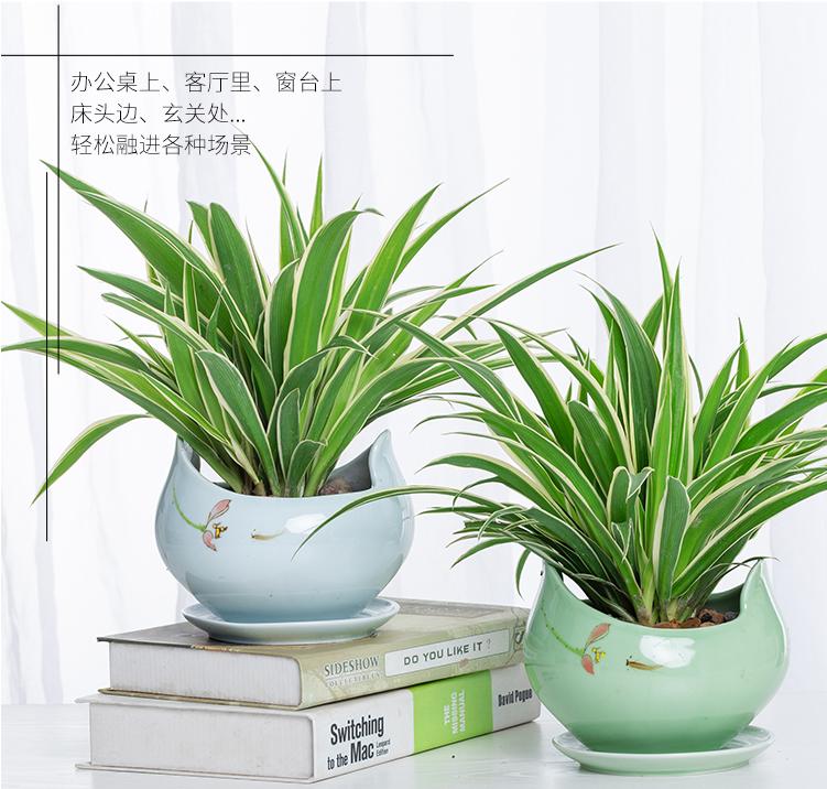 办公室绿植租赁,办公室植物租赁
