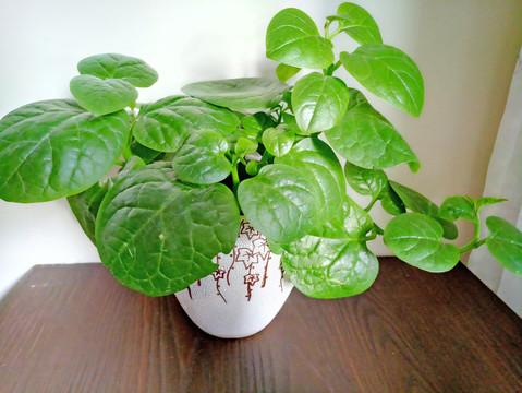 办公室植物租赁,杭州办公室植物租赁