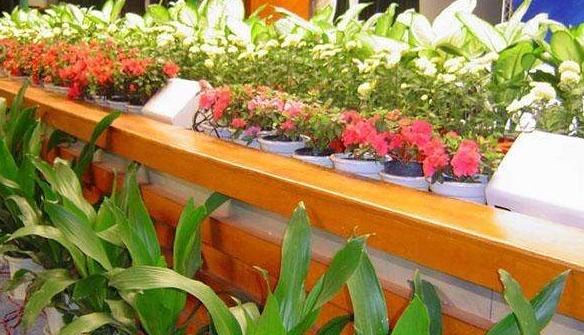 植物租赁时需要注意什么