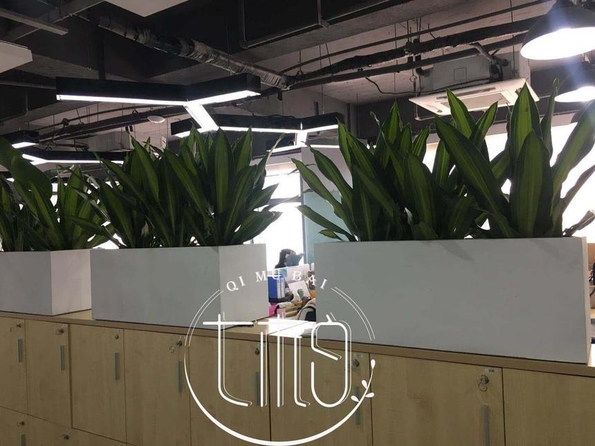 杭州七木白绿植租赁