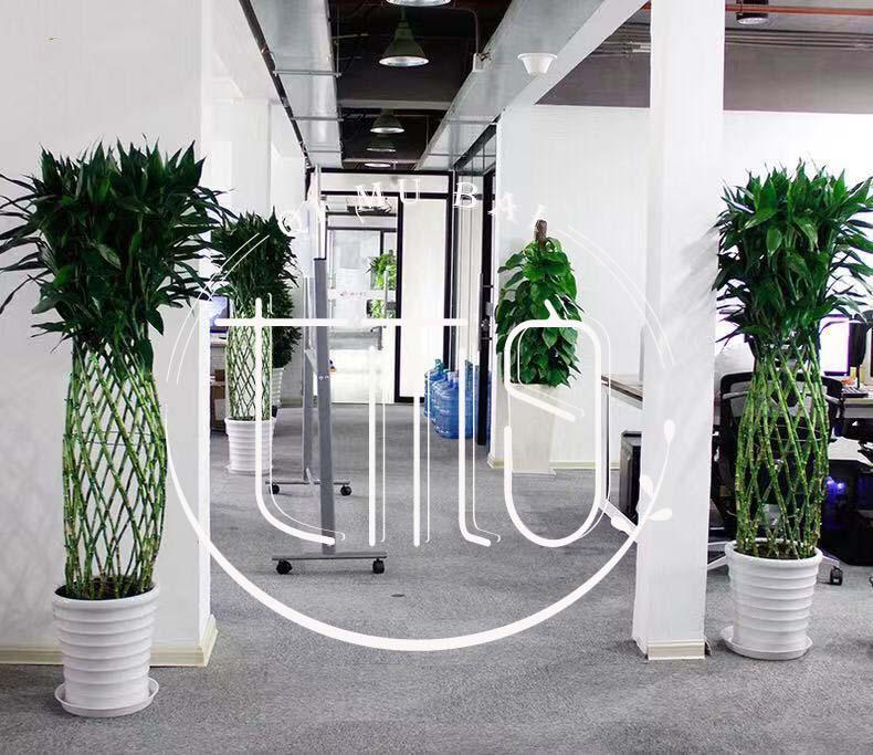 杭州绿植租赁