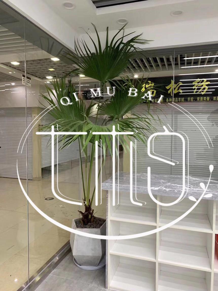 办公室植物出租