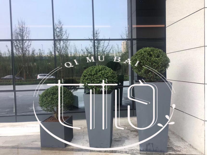 杭州绿植花卉租赁