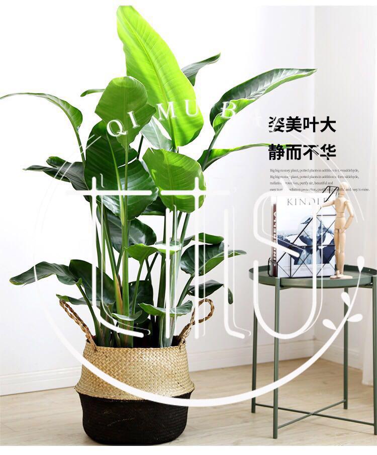 杭州绿植租摆