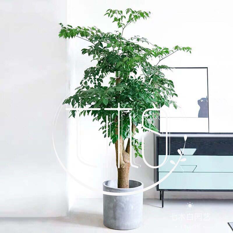 杭州办公室植物出租