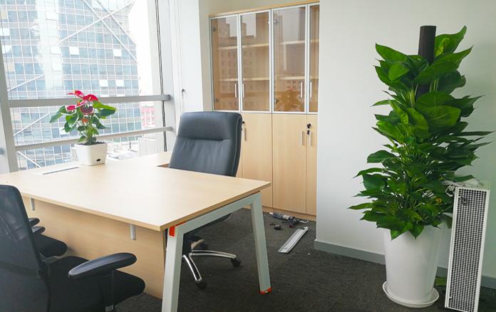 杭州办公室绿植租赁