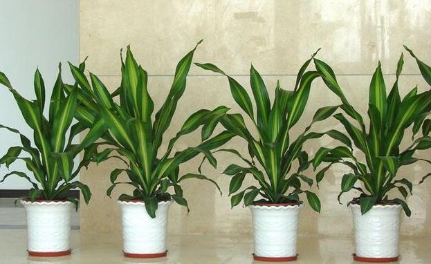 花卉植物租赁