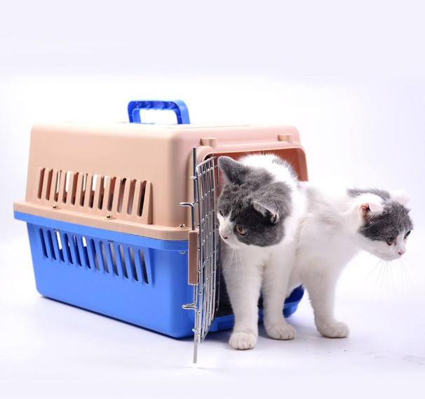天津航空宠物托运,天津航空宠物托运有哪些注意事项