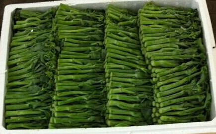 天津泰实蔬菜航空货运