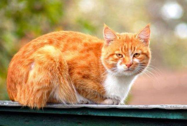 宠物猫空运时注意事项