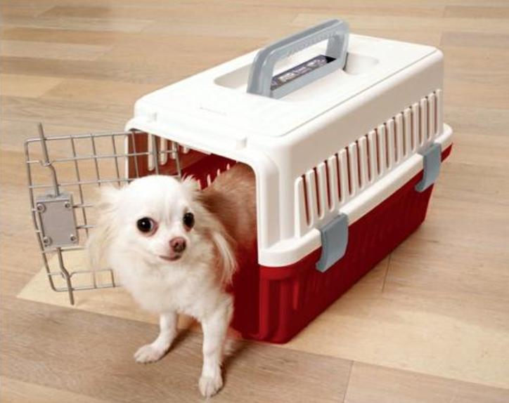 天津空运企业宠物托运的流程