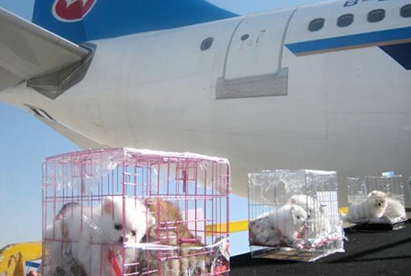 天津宠物航空托运