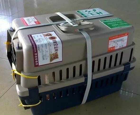 天津宠物空运一般需要办理哪些程序?