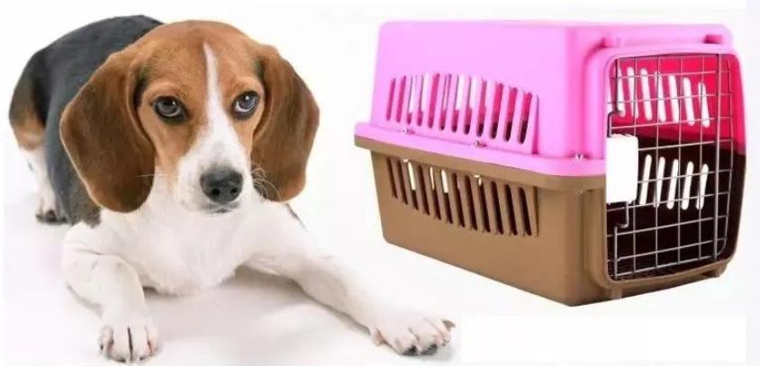 如何避免宠物托运中的意外?