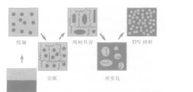 TPV材料动态全硫化过程