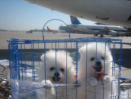 杭州宠物托运