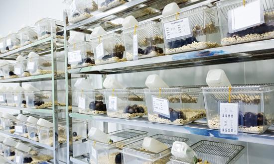 MDL小鼠饲养室