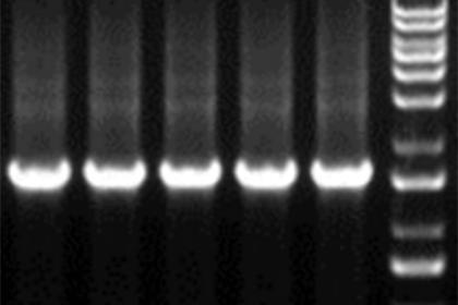 MDL百奥思科分子实验平台