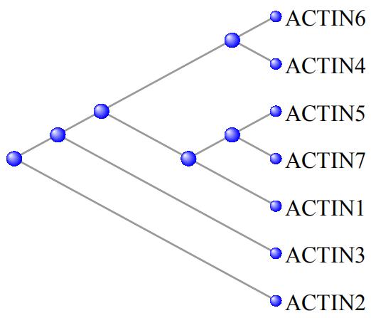 蛋白序列比对和进化树的绘制