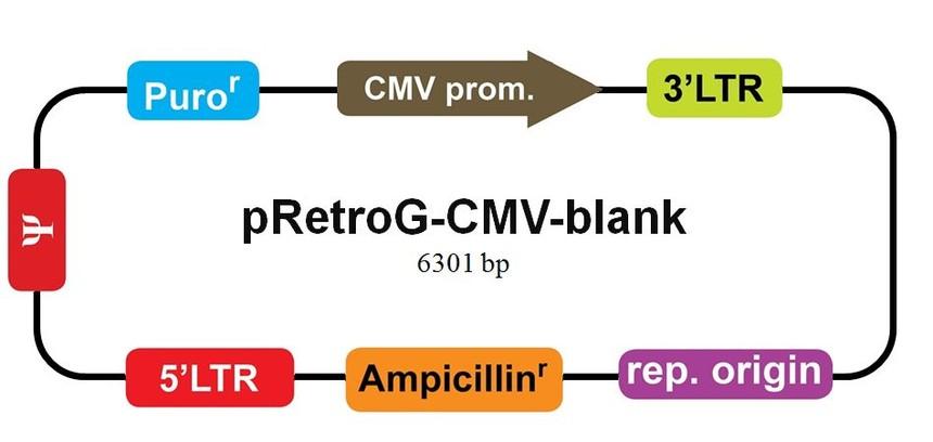 逆转录病毒质粒的示意例图