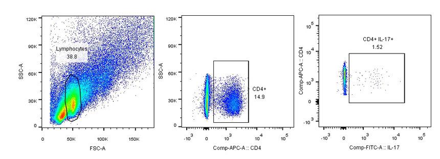 流式细胞术检测小鼠脾脏中Th17阳性细胞占比