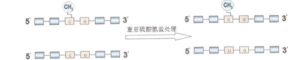 重亚硫酸盐处理过程示意图