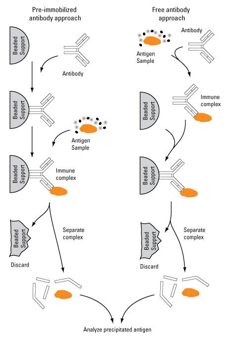 免疫沉淀 (1).png