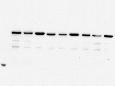 蛋白免疫1.jpg