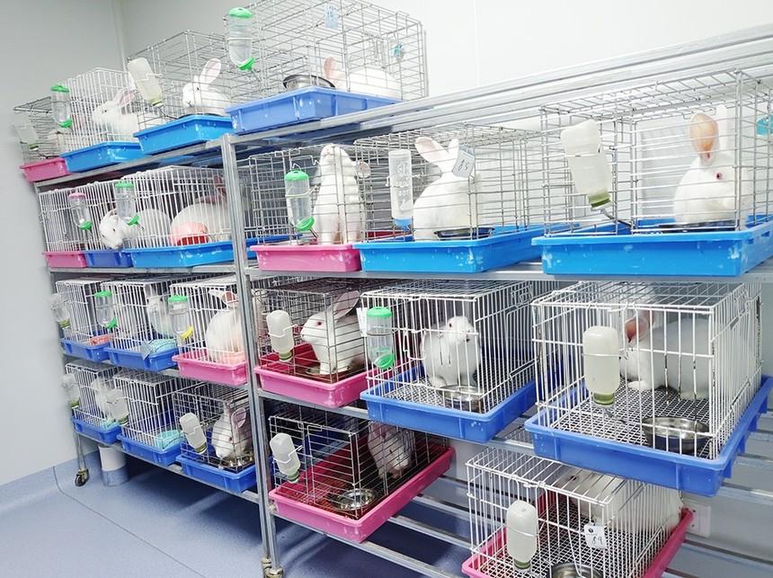 MDL动物房