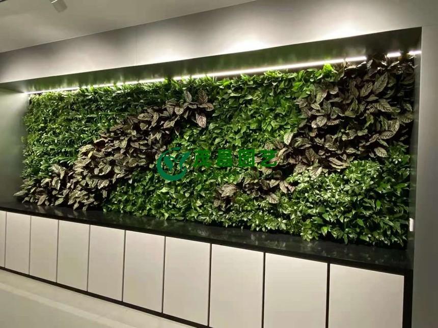 植物墙1.jpg