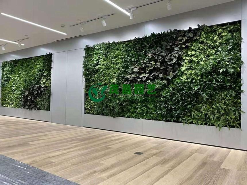 植物墙2.jpg