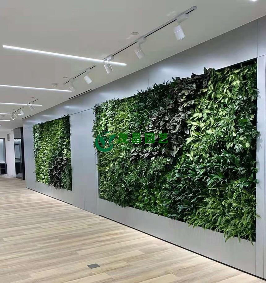 植物墙3.jpg