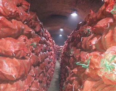 红薯栽培技术