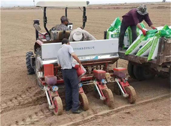 沙苑农场夏收基本结束,今年小麦取得好收成