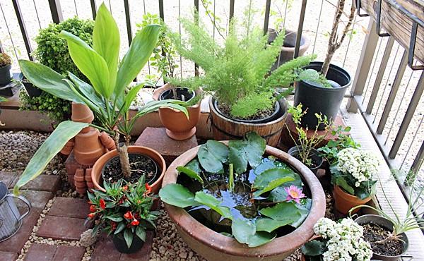 武汉spa会所后花园