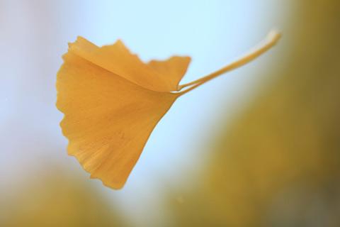 头部水疗按摩的方法应对秋天是脱发的季节