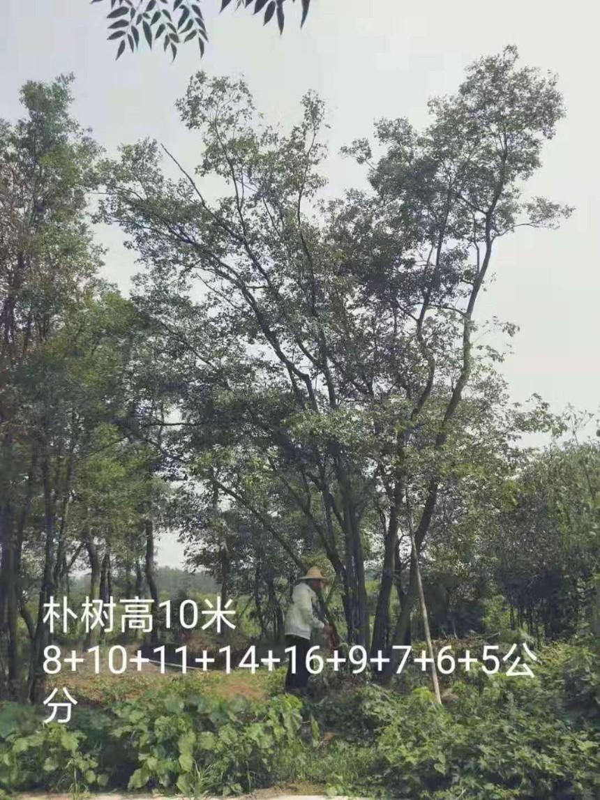 微信图片_20190721161211.jpg