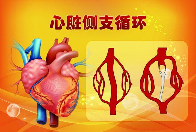 心动脉侧支循环1.jpg