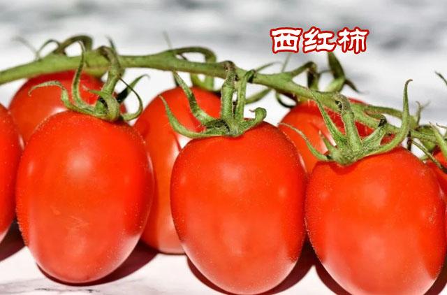 西红柿31副本.jpg