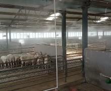 新疆羊场喷雾消毒案例