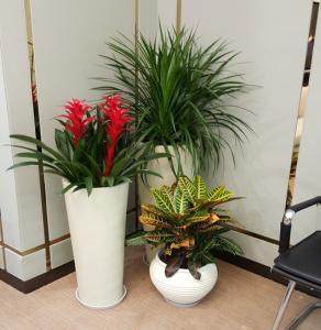 组合植物租摆案例