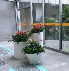 大厅绿植租摆案例