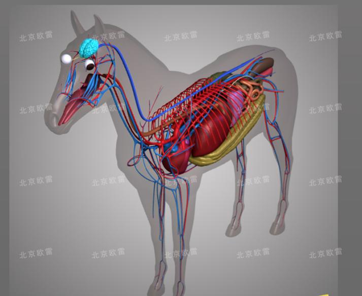 马解剖 虚拟仿真